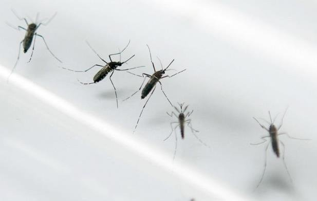 Dengue já matou 77 pessoas no Brasil este ano
