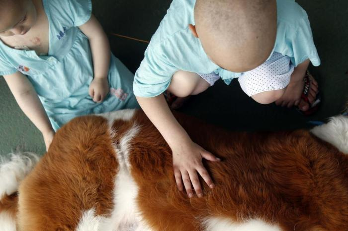 Pacientes de hospital de Caxias do Sul receberão a visita de animais disponíveis para adoção