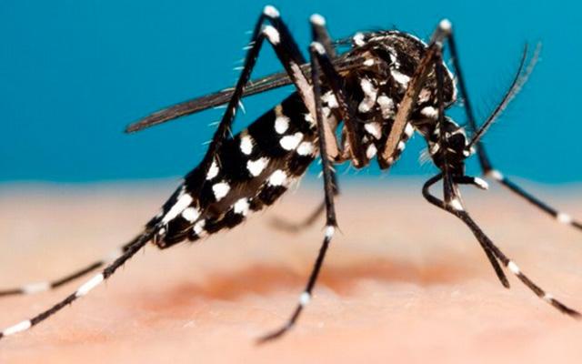 Confirmado segundo caso autóctone de dengue no Estado