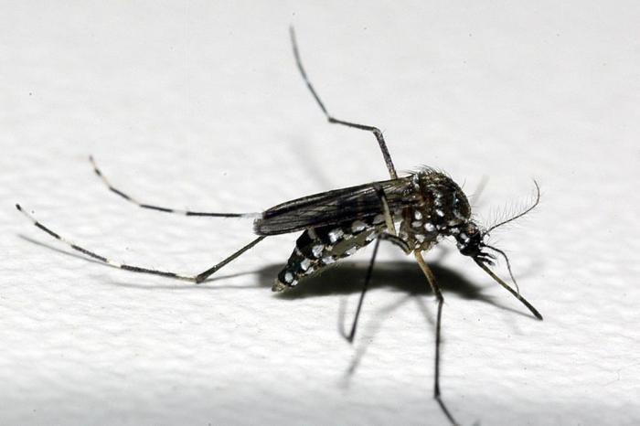 Secretaria Estadual da Saúde mantém alerta de cuidados para evitar a dengue no RS