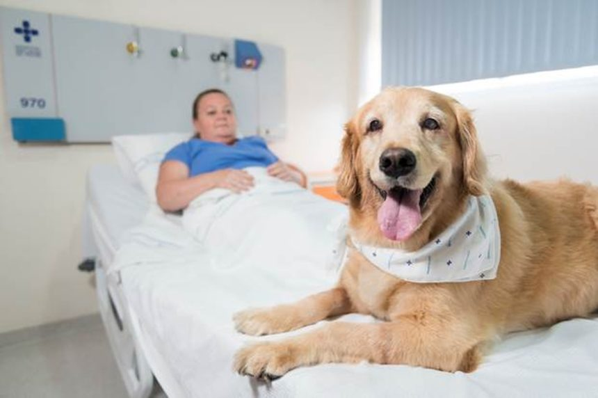 Governo sanciona lei que permite entrada de animais em hospitais do RS